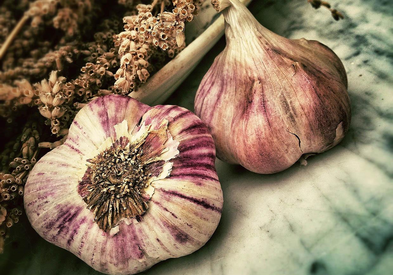 GarlicTemp